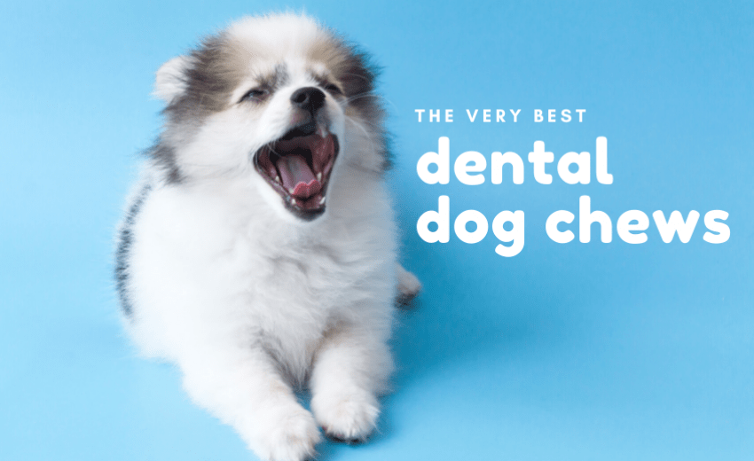 Greatest Dog Growing In 2020 Organic Treats For Your Dog