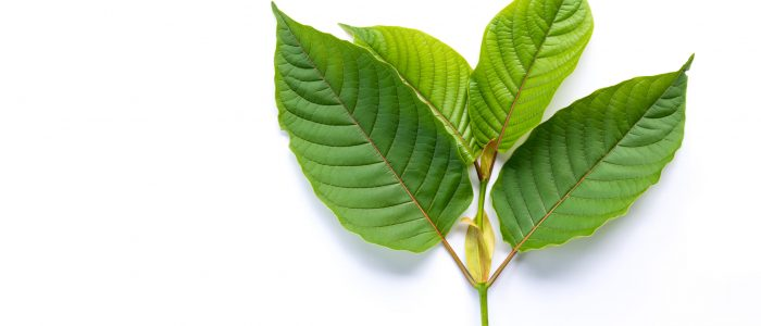 7 Suggestions To Begin Structure A Finest Kratom You Constantly Wanted